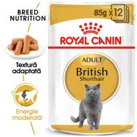 Pachet Royal Canin British Shorthair Adult, 12 plicuri x 85 g