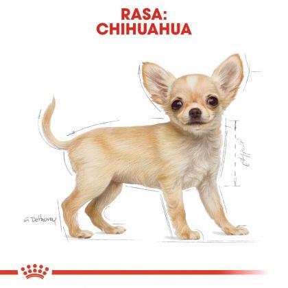 Royal Canin Chihuahua Puppy, 1.5 Kg